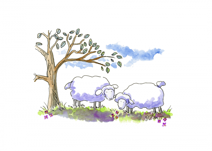 Two Sheep